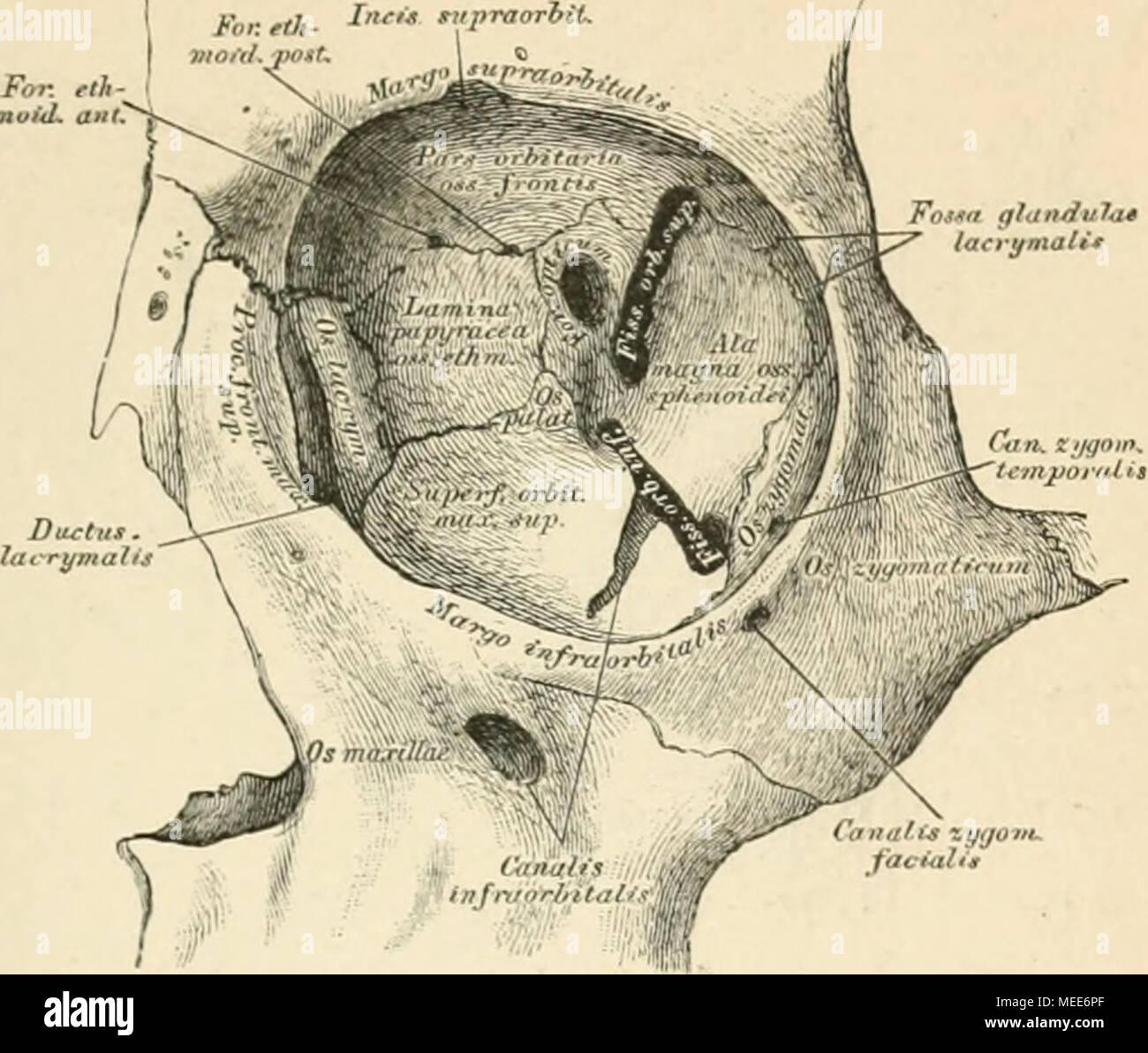 Ziemlich Anatomie Des Git Fotos - Menschliche Anatomie Bilder ...