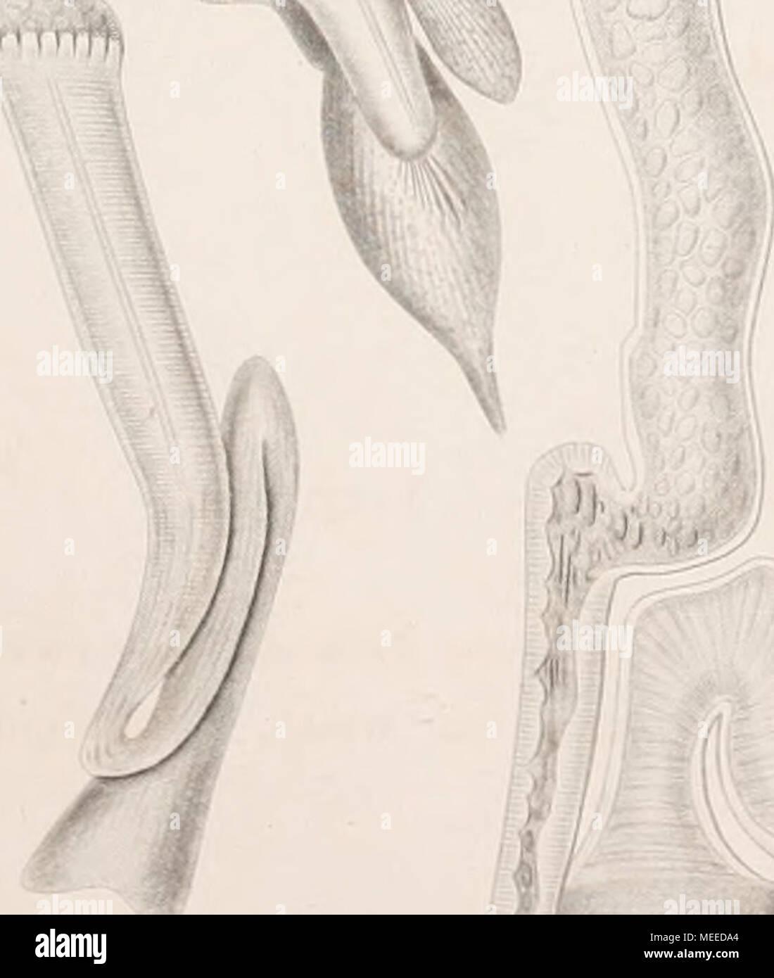Booksubjectworms Stockfotos & Booksubjectworms Bilder - Alamy