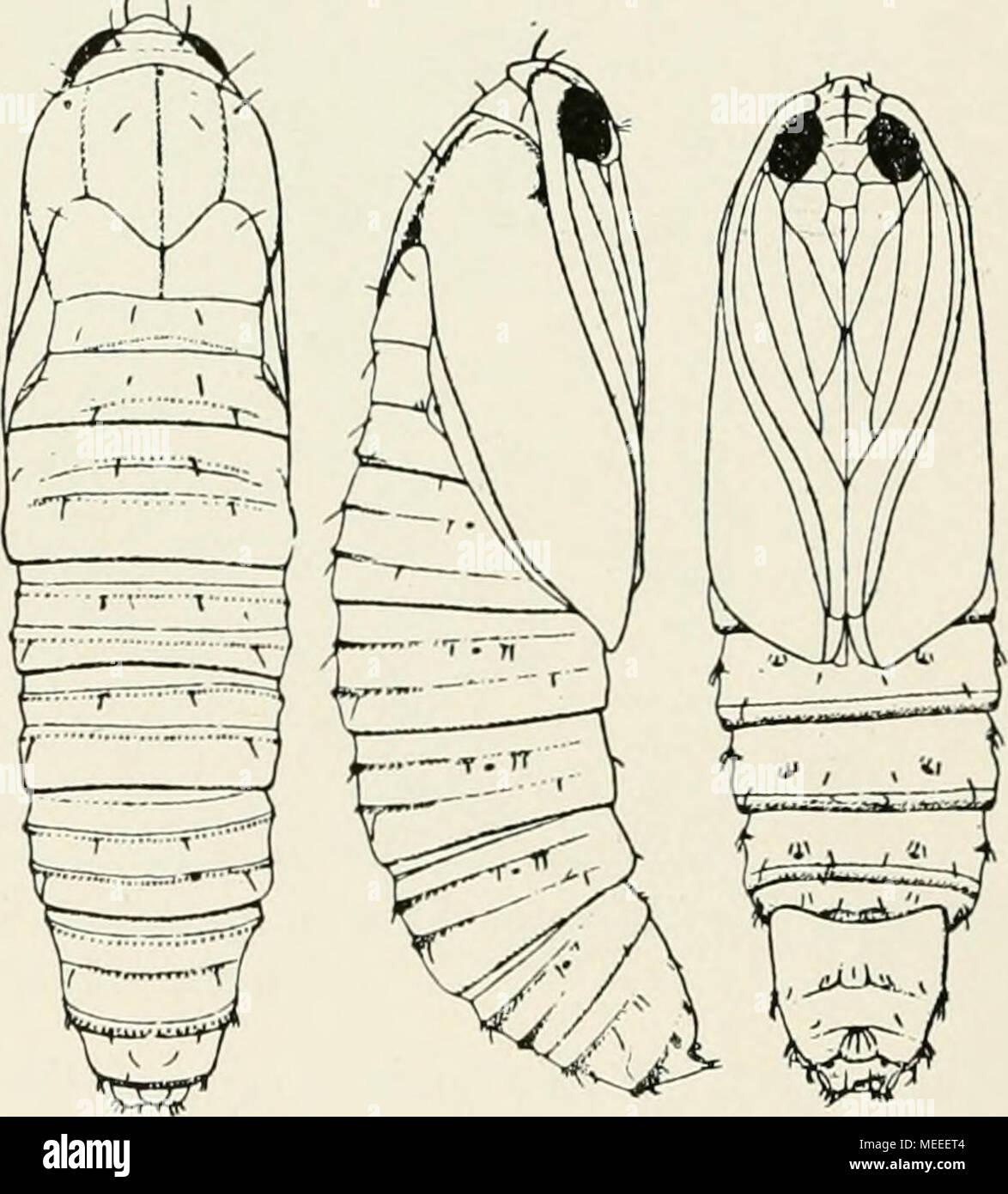 Beste Insekten Färbung Seite Bilder - Malvorlagen-Ideen ...