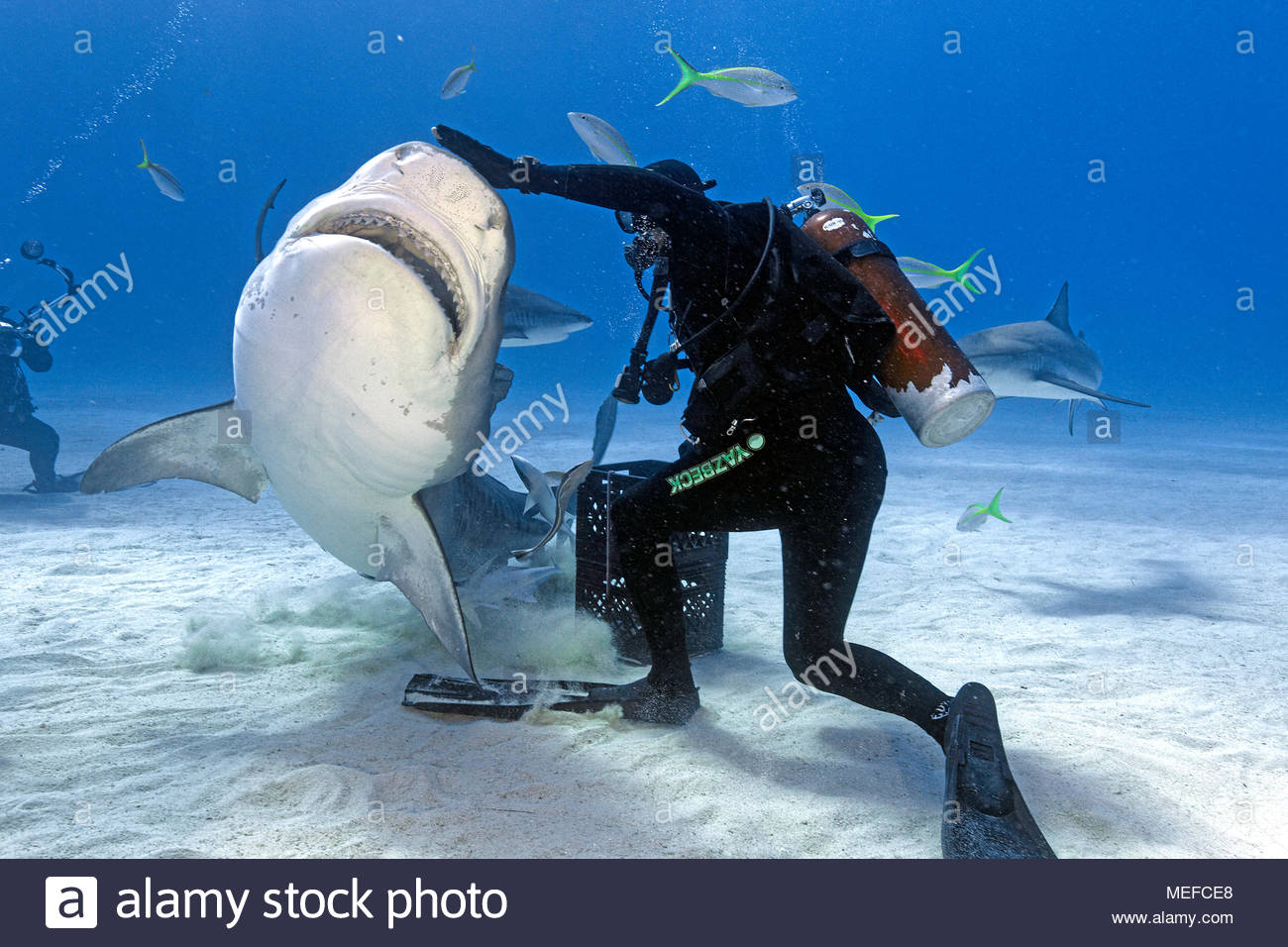 Beste Tigerhai Färbung Seite Fotos - Druckbare Malvorlagen ...