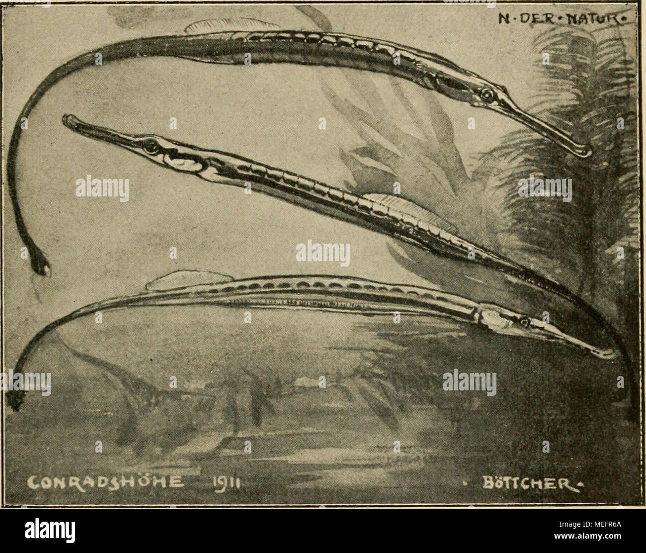 Seepferdchen Stockfotos & Seepferdchen Bilder - Alamy