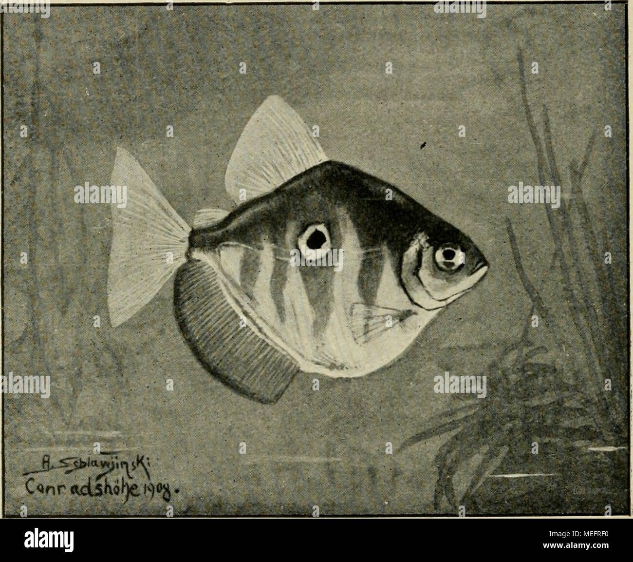 Erfreut Fisch Färbung Galerie - Druckbare Malvorlagen - amaichi.info