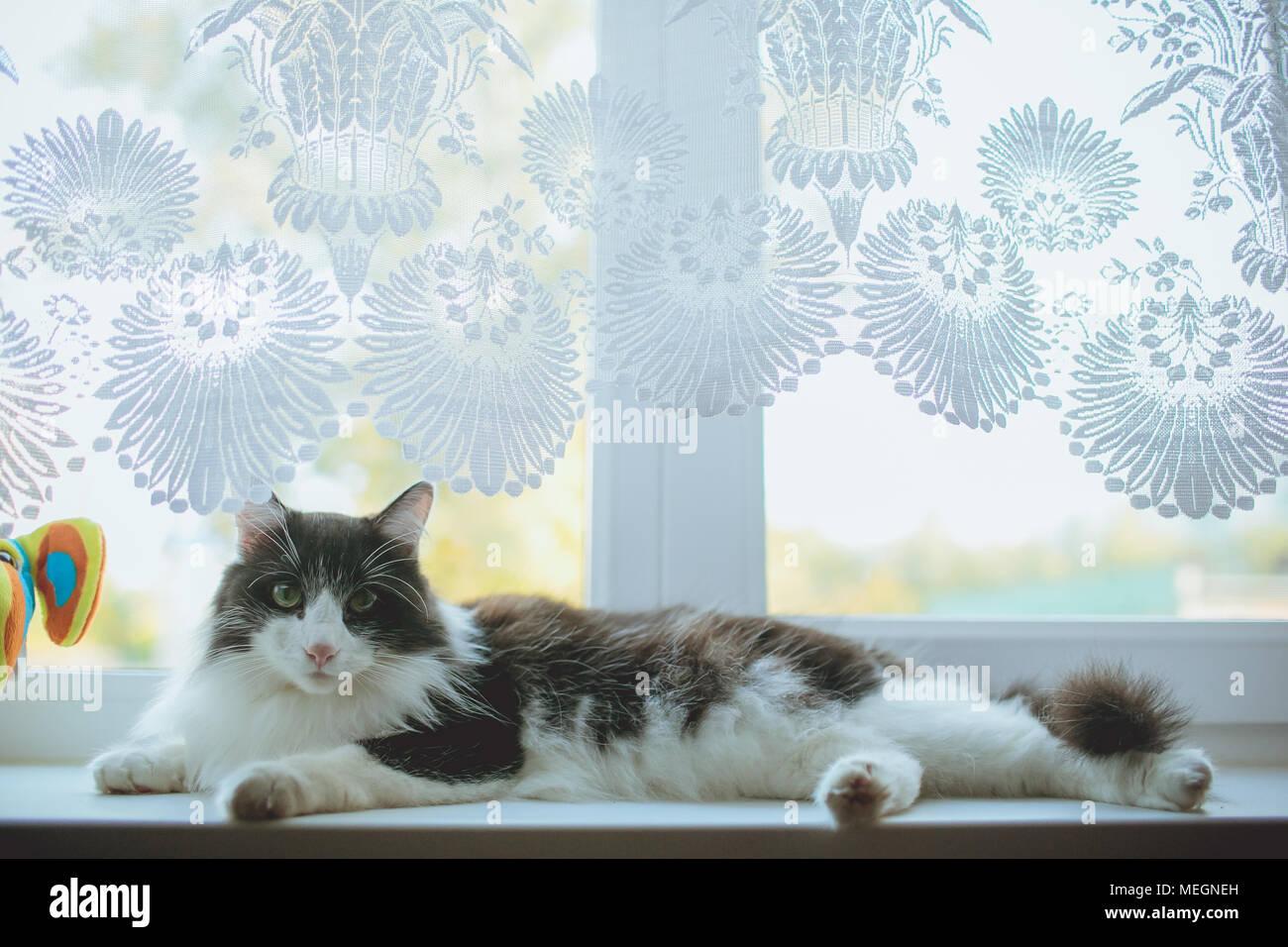 Tabby Kitten Sleeping Book Stockfotos & Tabby Kitten Sleeping Book ...