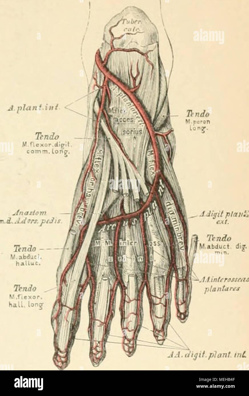 Großartig Zweige Der Anatomie Und Physiologie Ideen - Menschliche ...