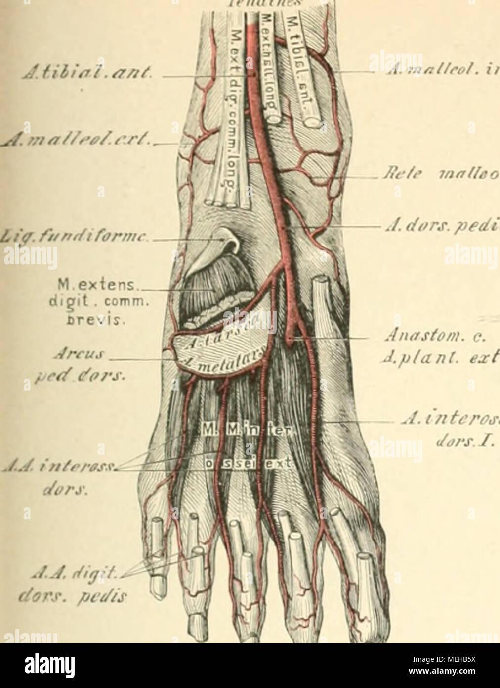 Fein Menschliche Anatomie Und Physiologie Laborhandbuch Fötale ...
