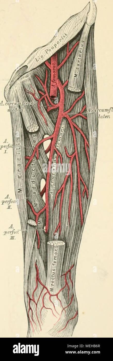 Ausgezeichnet Frage Der Anatomie Ideen - Menschliche Anatomie Bilder ...