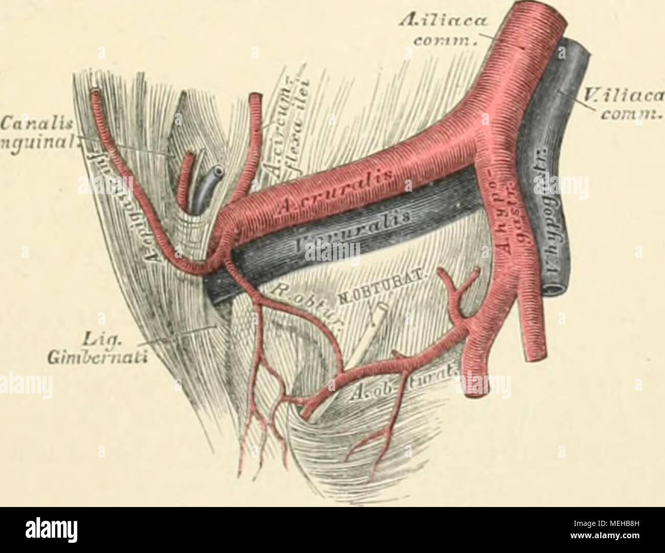 Charmant Mra Kreis Von Willis Anatomie Fotos - Anatomie Ideen ...