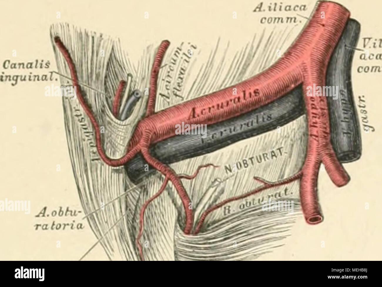 Tolle Anatomie Des Menschen Malerei Fotos - Menschliche Anatomie ...