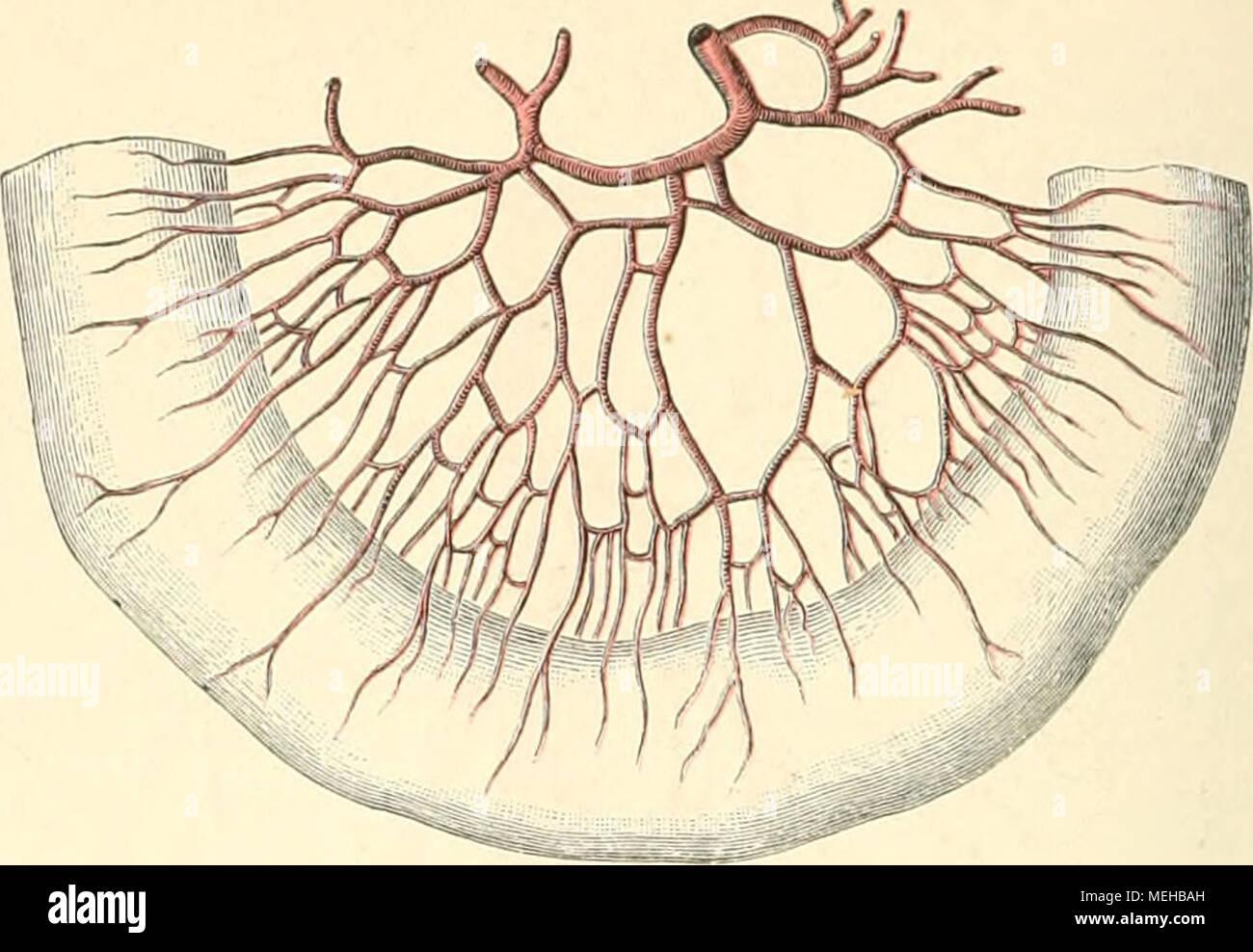 Großartig Anatomie Der Hölle Wiki Bilder - Anatomie Ideen - finotti.info