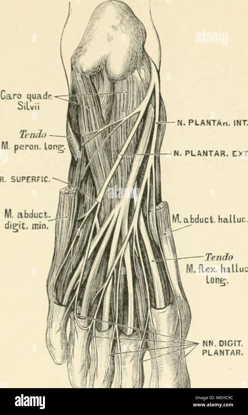 Berühmt Menschliche Anatomie Und Physiologie Laborhandbuch Marieb ...
