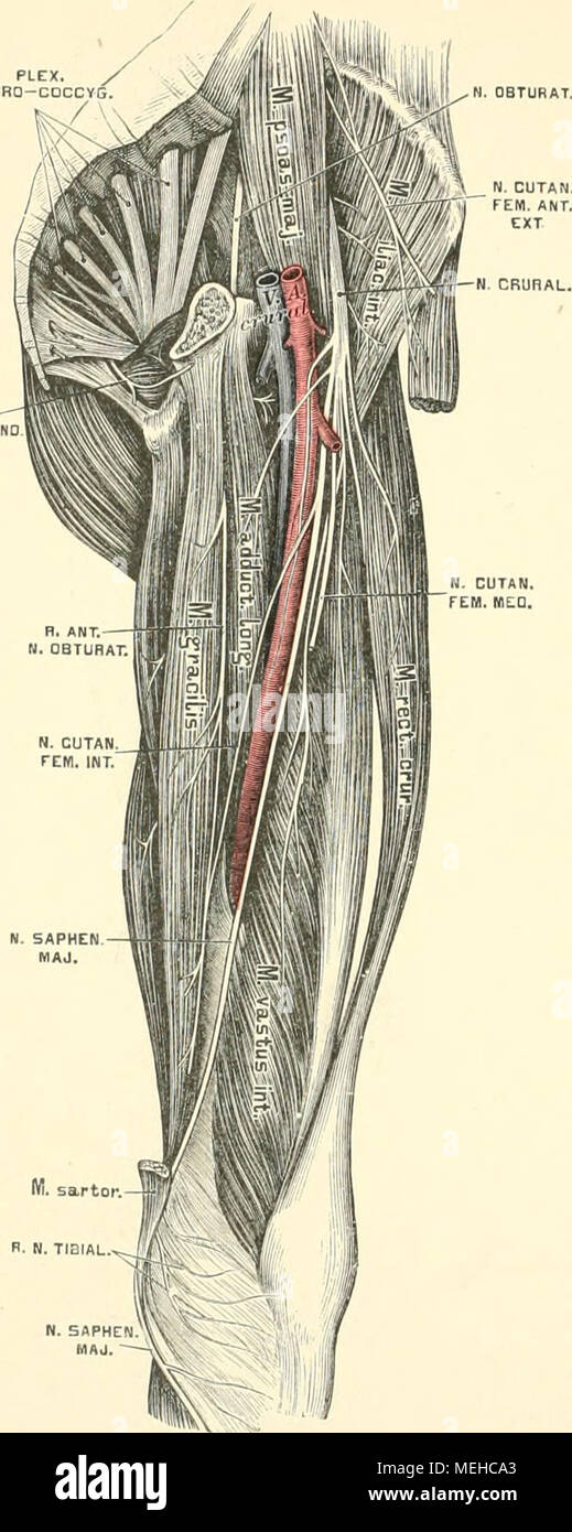 Erfreut Anatomie Und Physiologie Kapitel 6 Die Muskulatur Fotos ...