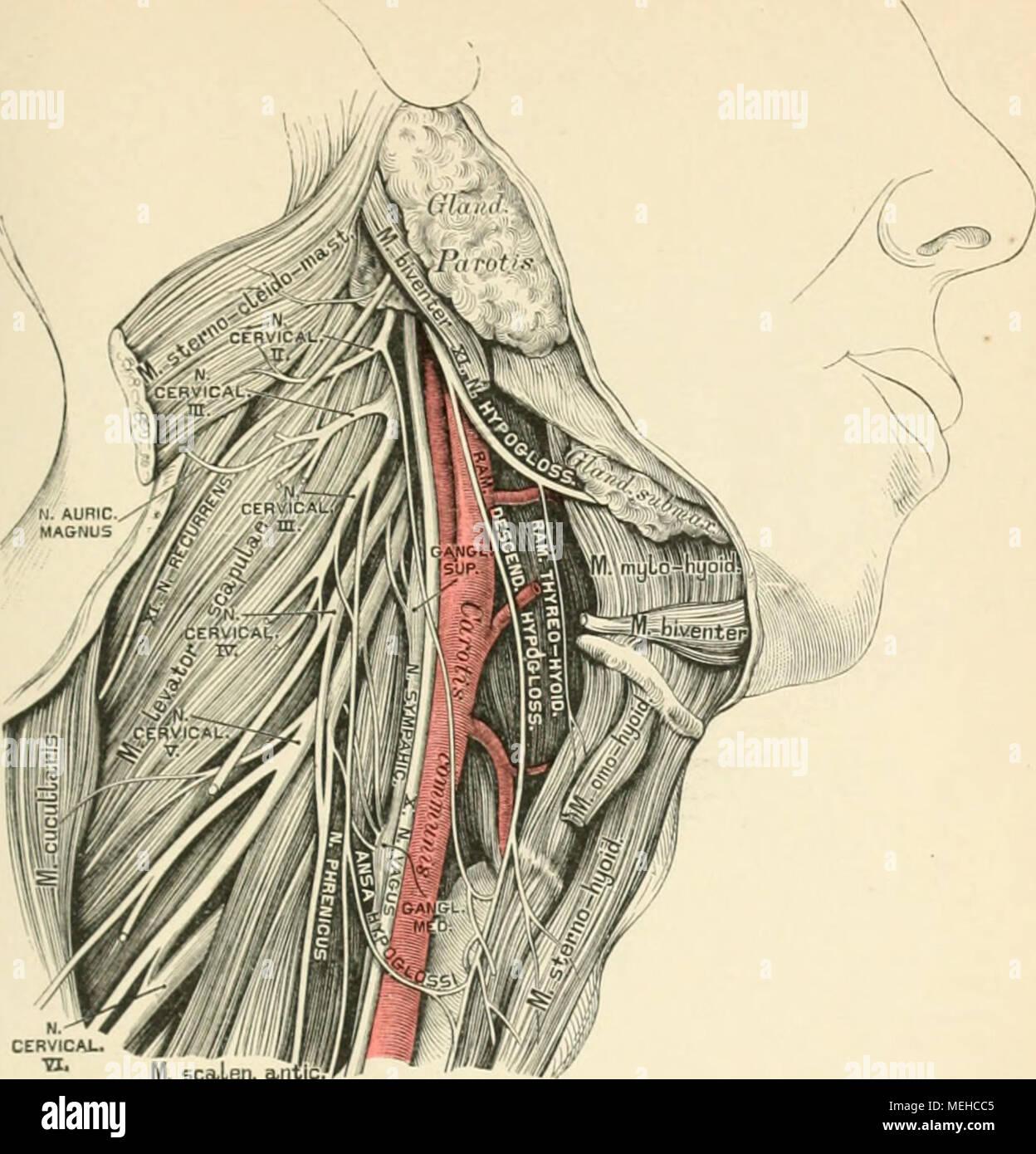 Tolle Rücken Anatomie Definition Zeitgenössisch - Menschliche ...