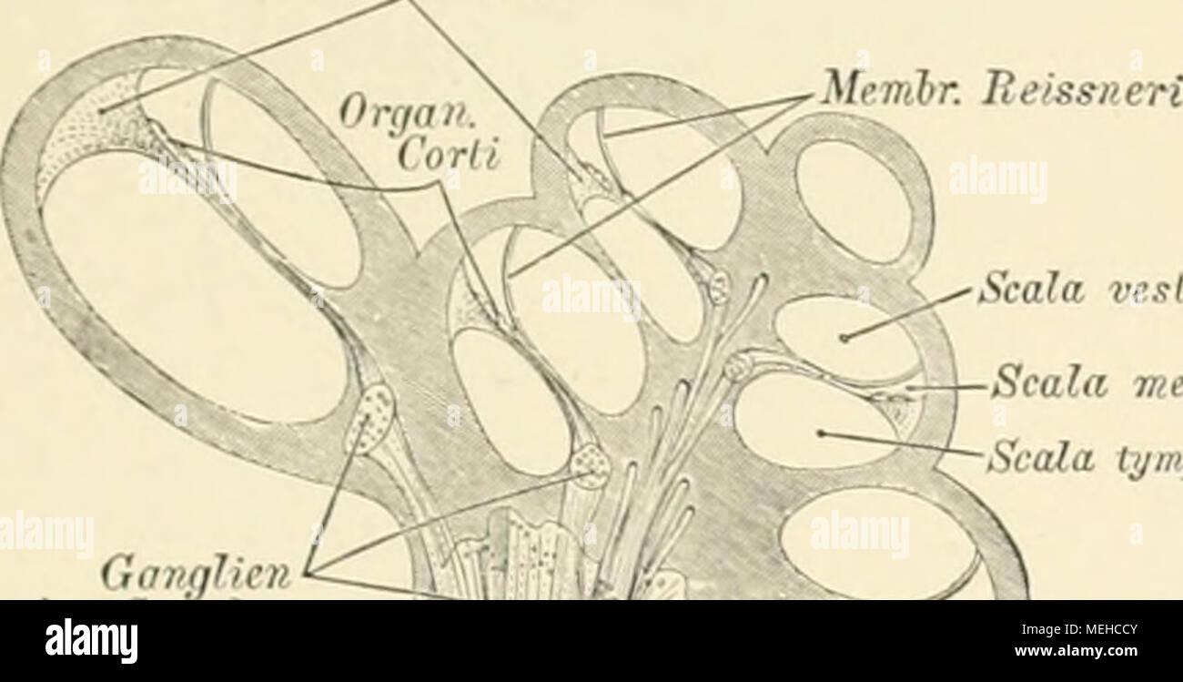 Fantastisch Dritte Nerv Anatomie Galerie - Anatomie Ideen - finotti.info