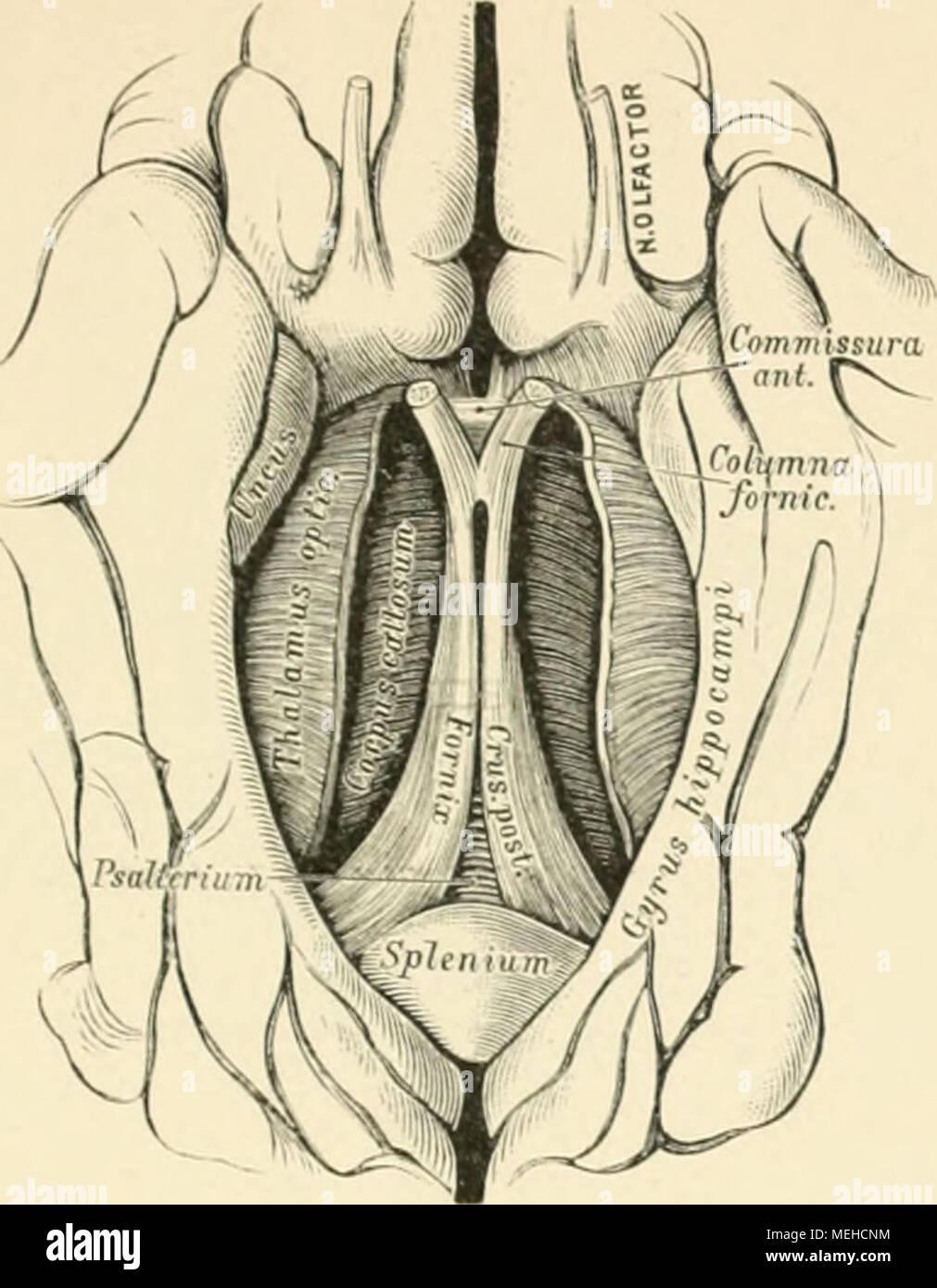 Ziemlich Anatomie Und Physiologie Des Menschlichen Körpers Eine ...