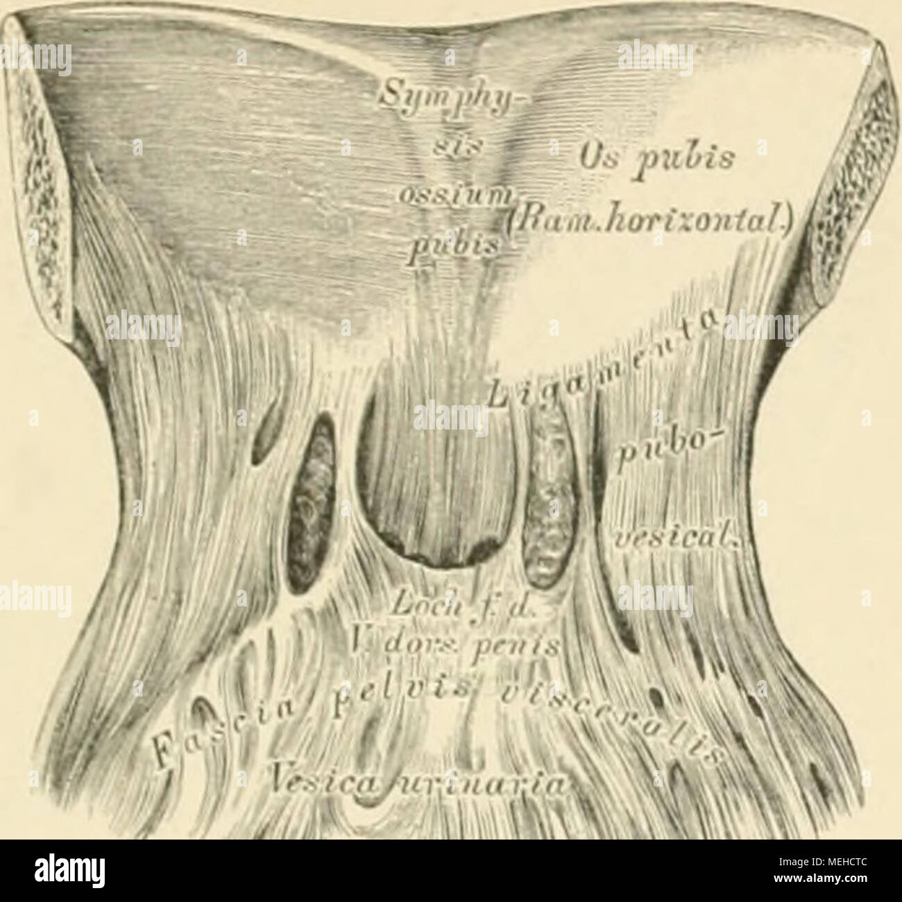 Ungewöhnlich Linke Seite Anatomie Fotos - Menschliche Anatomie ...
