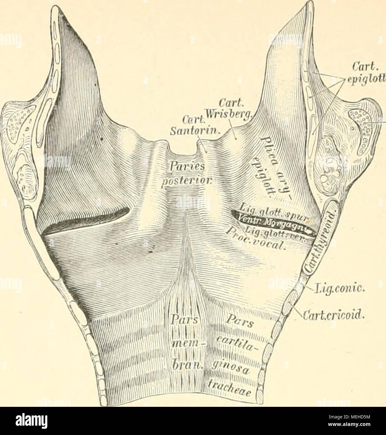 Groß Mantis Garnelen Anatomie Bilder - Anatomie Ideen - finotti.info