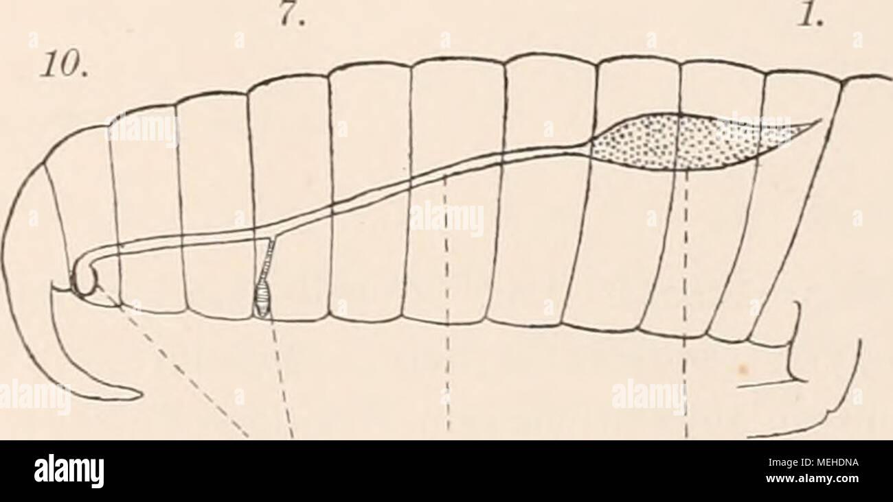 Fein Bild Des Weiblichen Fortpflanzungssystems Diagramm Galerie ...
