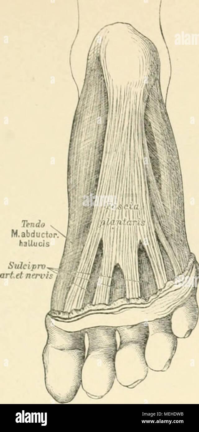 Tolle Endokrine Körpersystem Ideen - Menschliche Anatomie Bilder ...