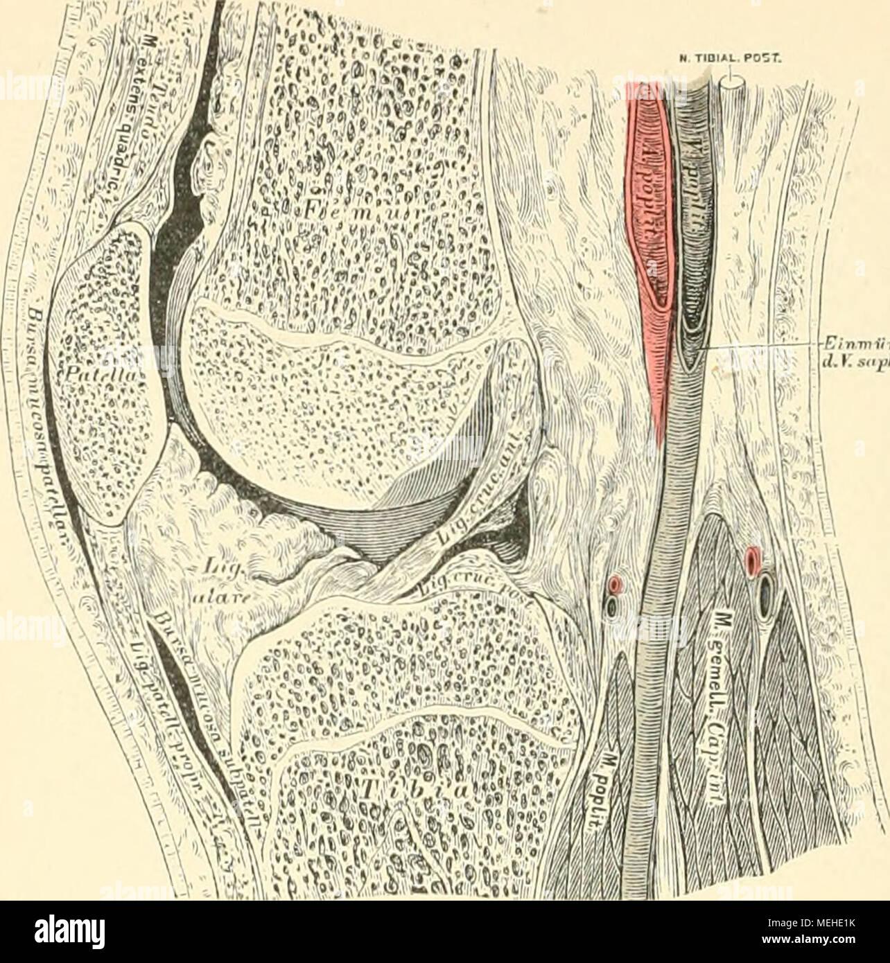 Ausgezeichnet Mitte Rückenmuskulatur Anatomie Ideen - Anatomie Ideen ...