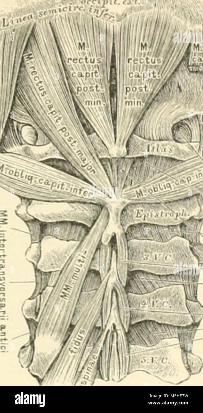 Fein Anatomie Höhlen Des Kopfes Zeitgenössisch - Anatomie Ideen ...