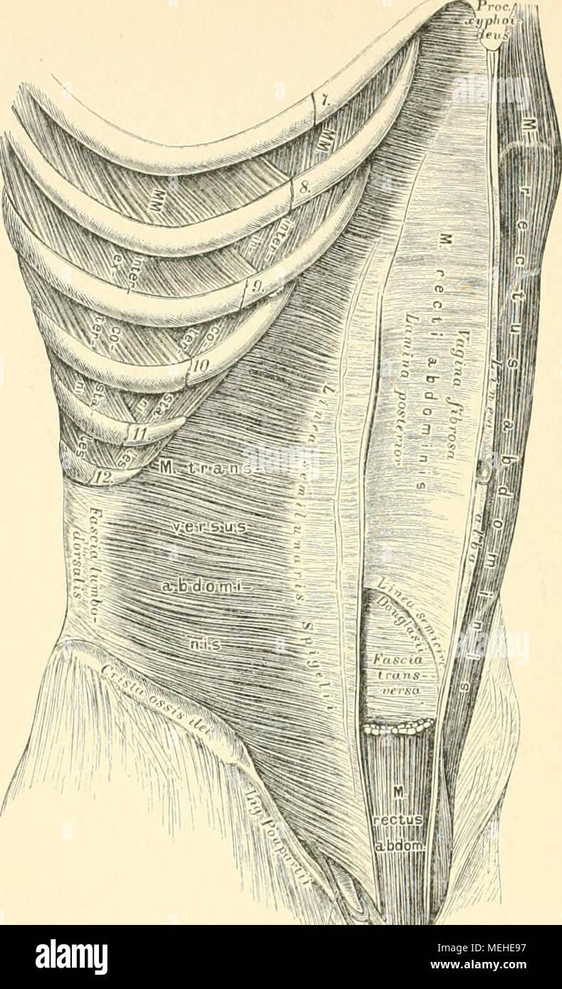 Tolle Kiefermuskeln Anatomie Bilder - Menschliche Anatomie Bilder ...