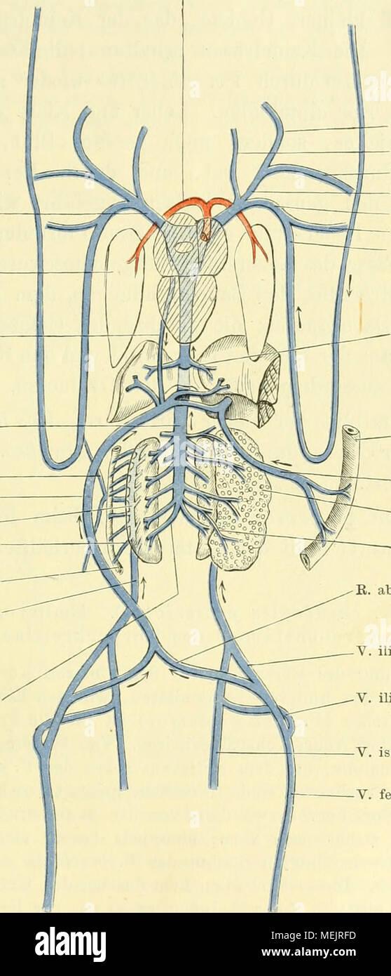 Charmant Anatomie Und Physiologie Färbung Arbeitsmappe Das ...