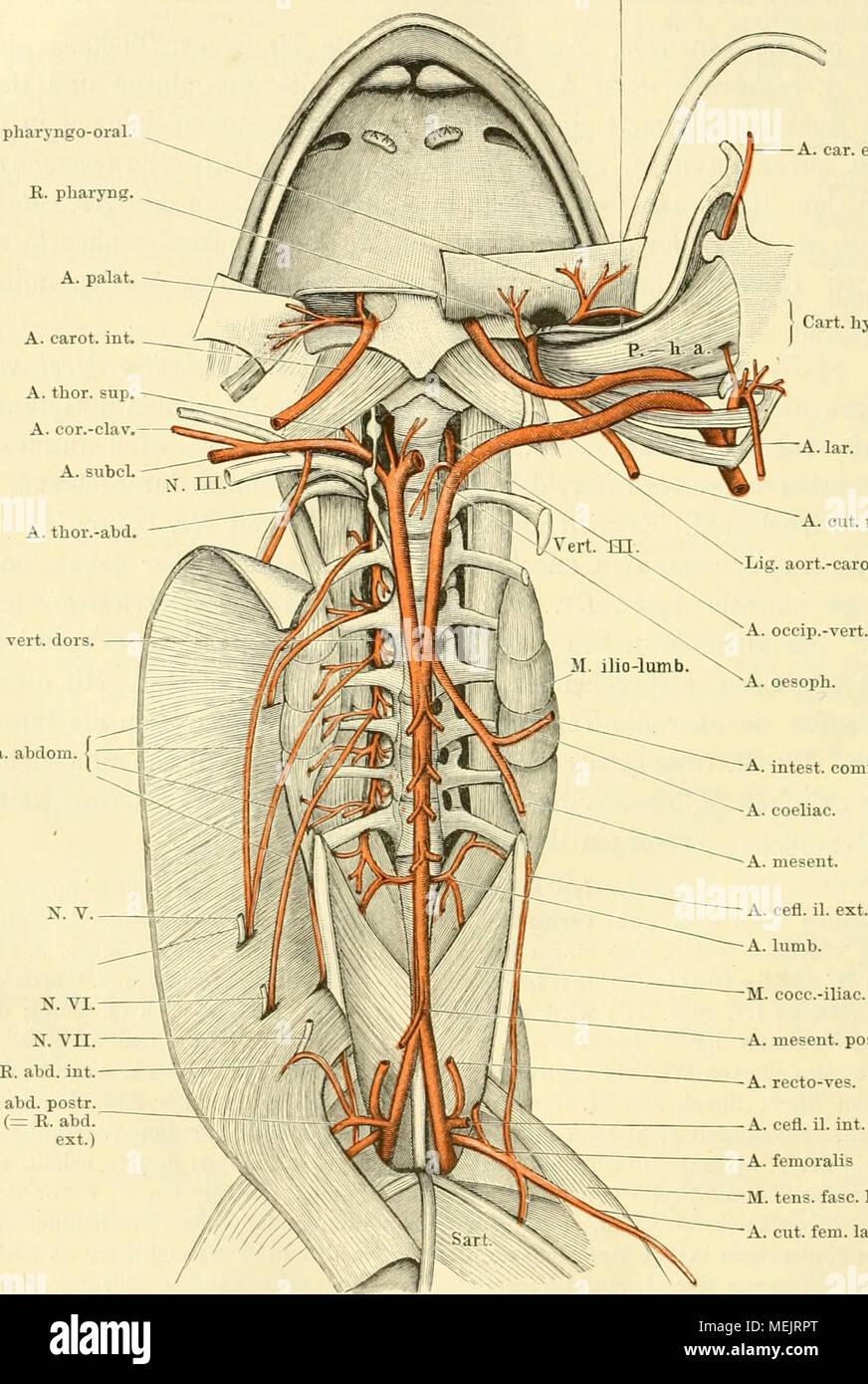 Großartig Mosbys Anatomie Und Physiologie Studie Und überprüfung ...