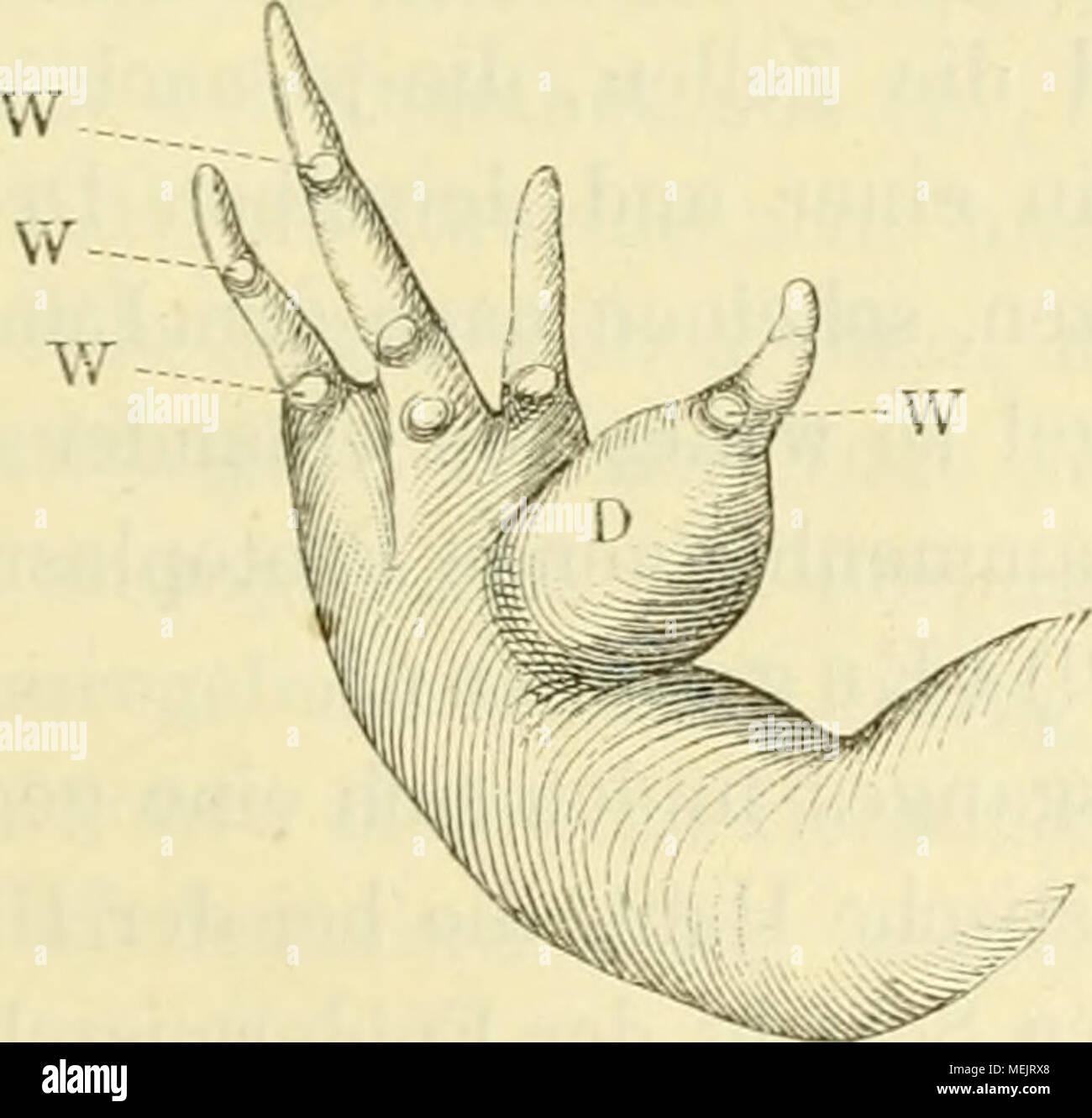 Großzügig Strecksehne Hand Anatomie Fotos - Menschliche Anatomie ...