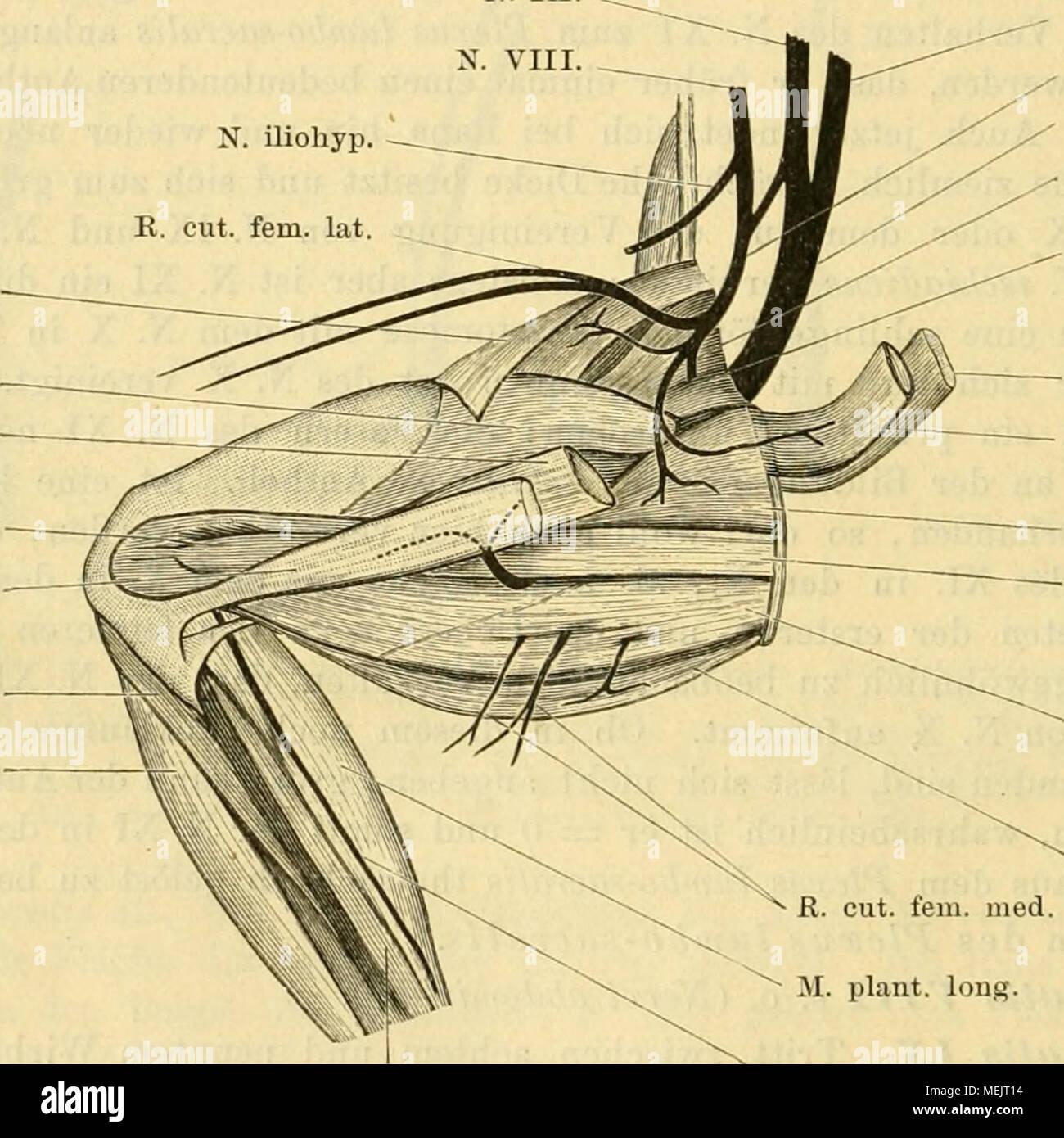 Wunderbar Was Bedeutet Distales Mittelwert In Der Anatomie Galerie ...