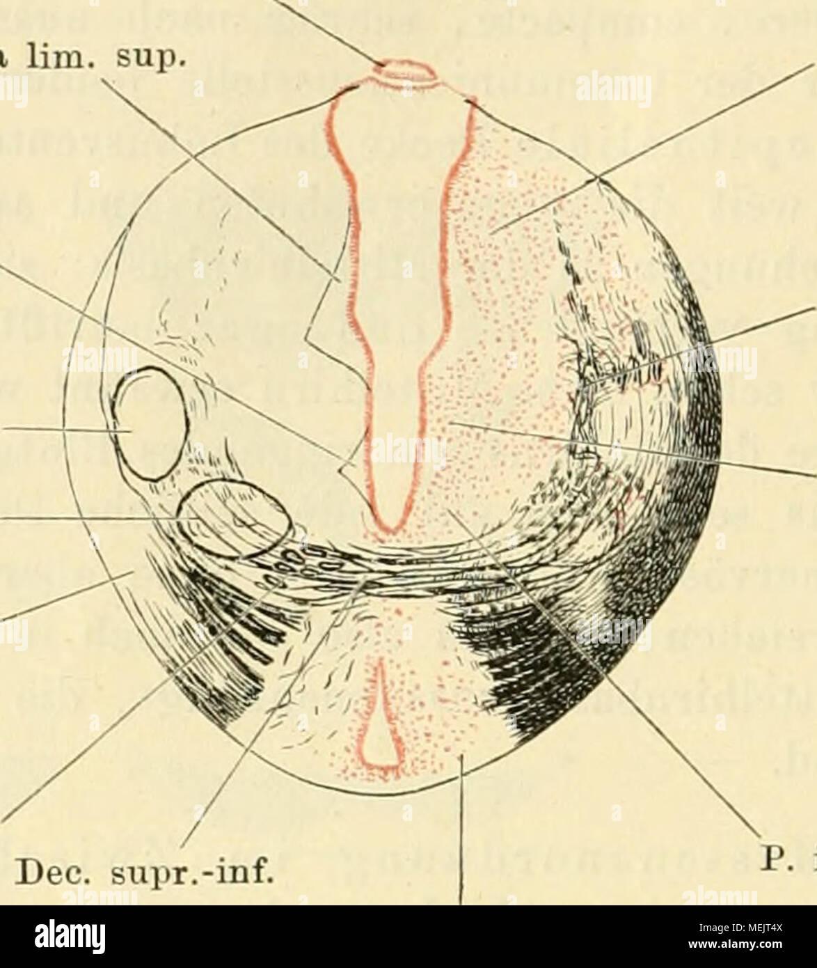 Nett Außen Auge Anatomie Bilder - Menschliche Anatomie Bilder ...