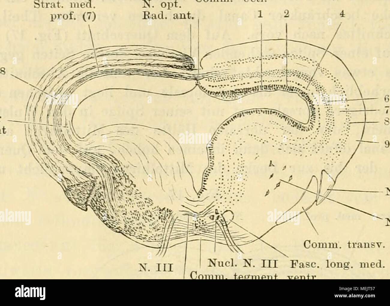 Ausgezeichnet Anatomie Testfragen Zeitgenössisch - Menschliche ...