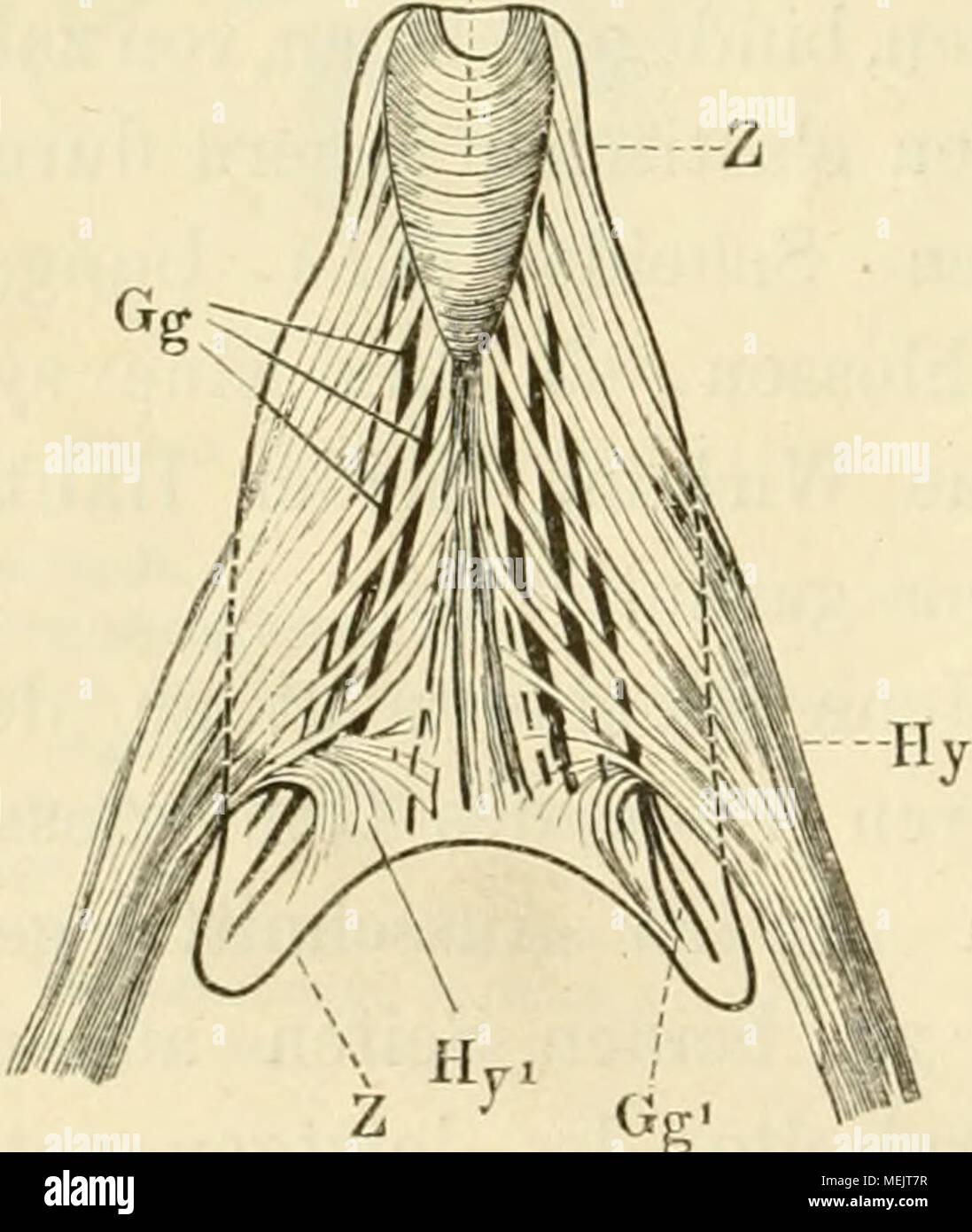 Ausgezeichnet Zunge Anatomie Unterseite Fotos - Menschliche Anatomie ...