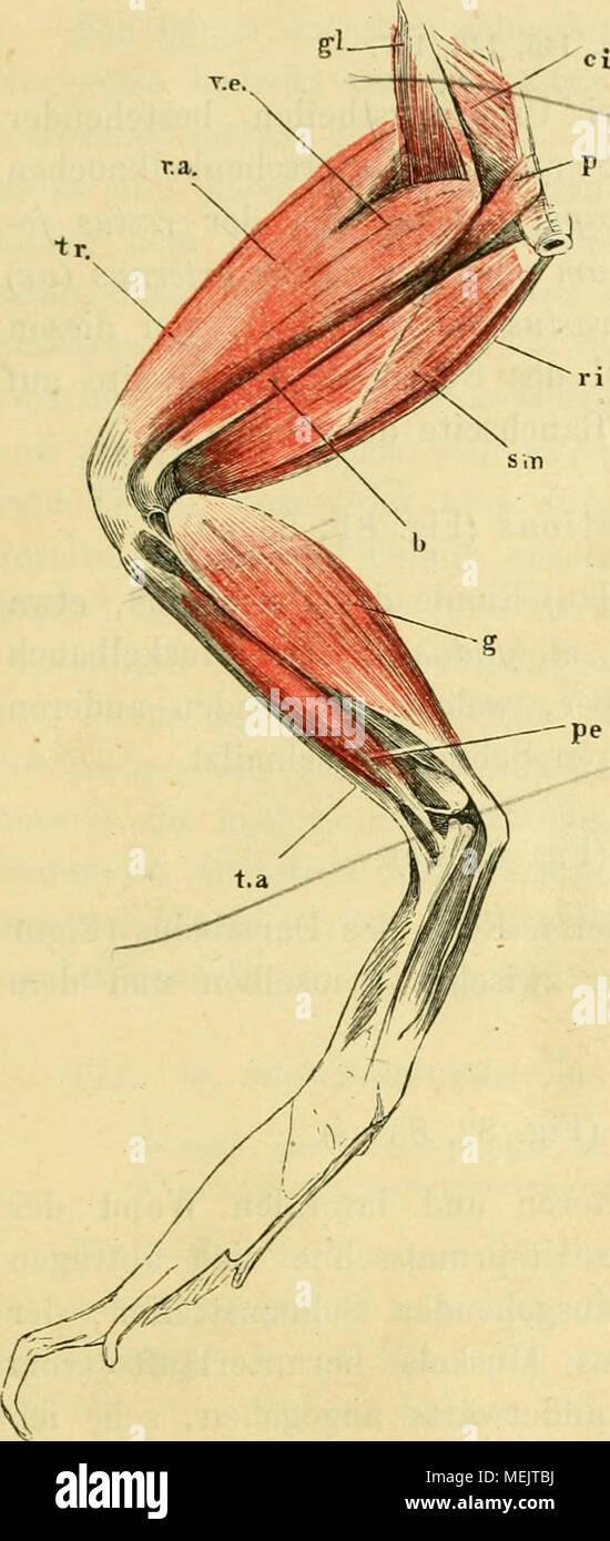 Erfreut Vogelei Anatomie Ideen - Menschliche Anatomie Bilder ...
