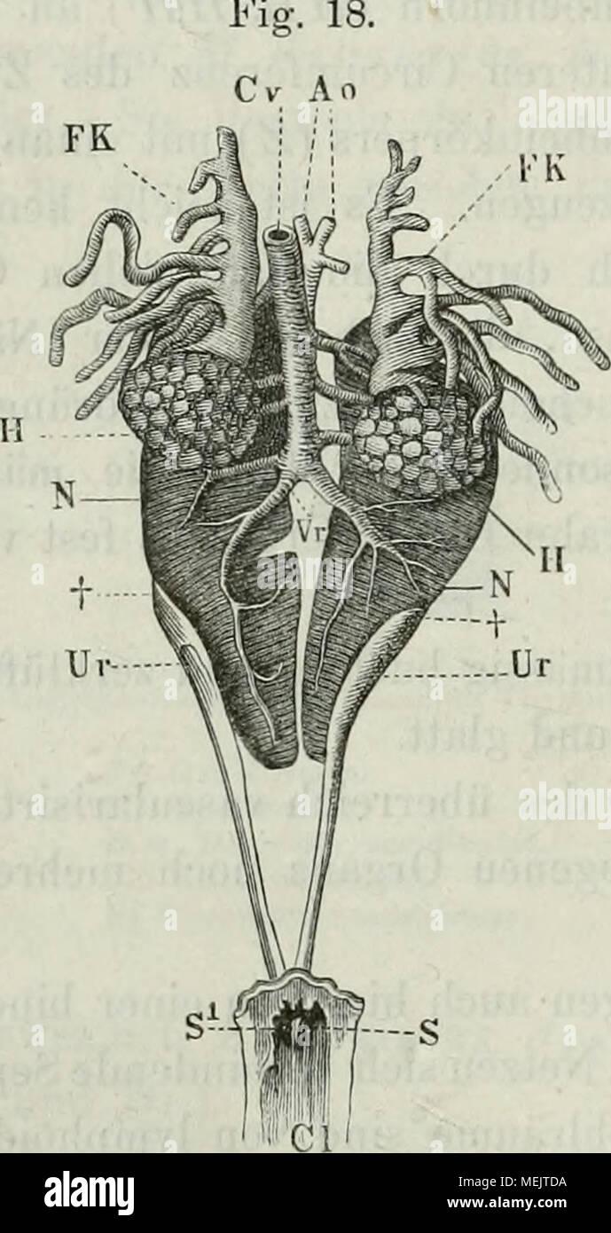 Berühmt Männliches Schwein Anatomie Fotos - Menschliche Anatomie ...