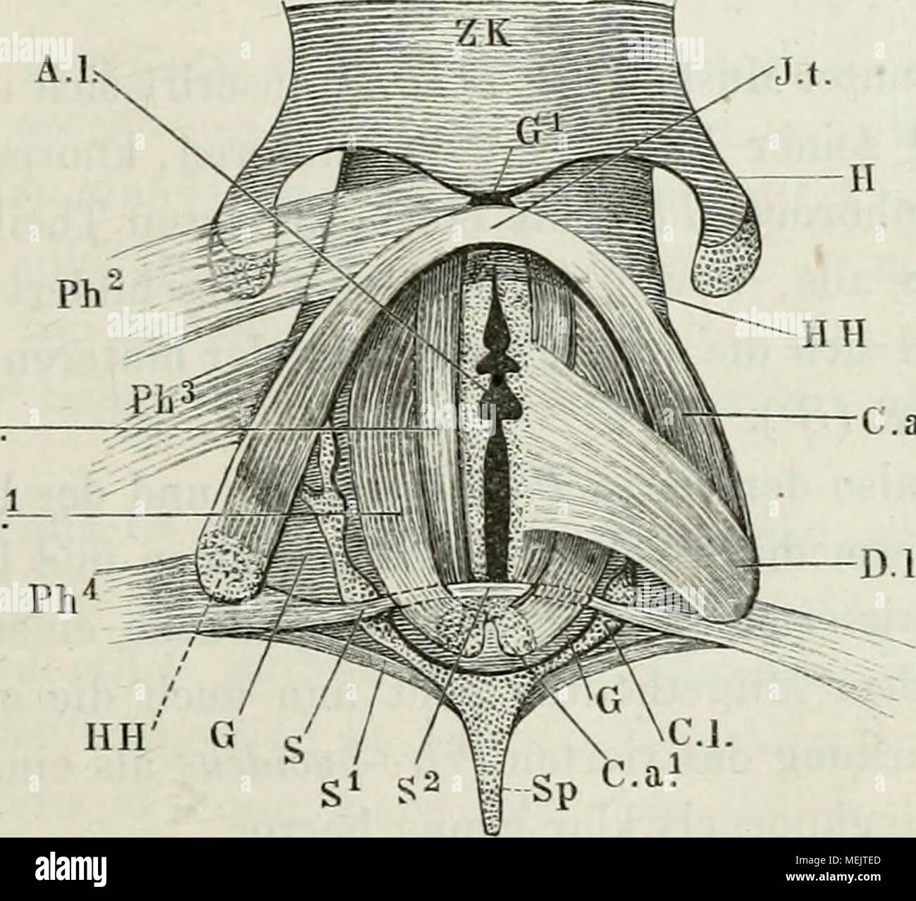 Atemberaubend Anatomie Der Gewebe Bilder - Menschliche Anatomie ...