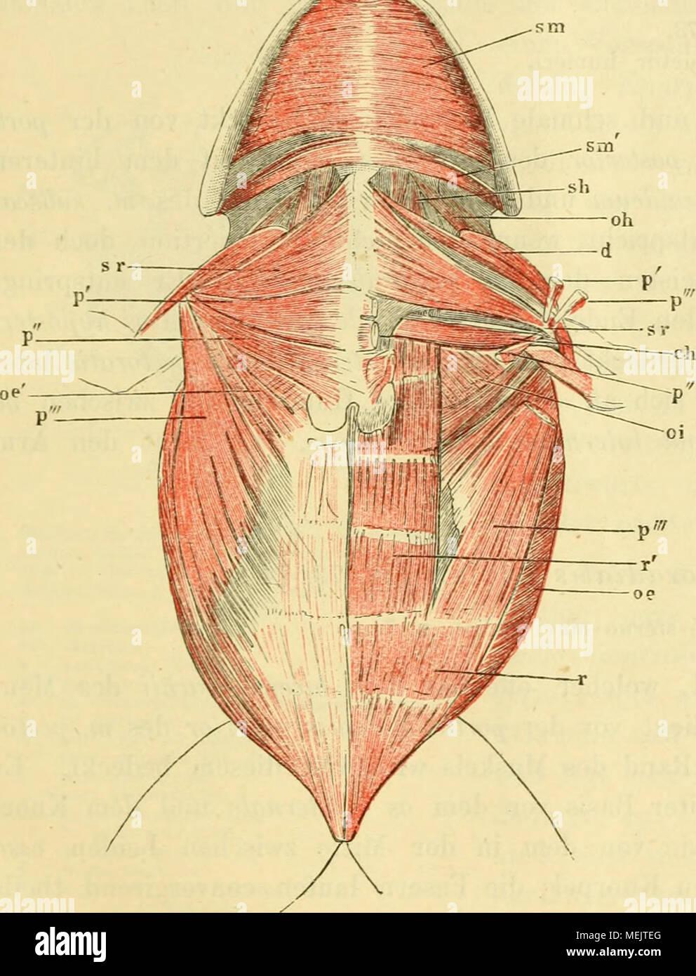 Niedlich Anatomie Und Physiologie Kapitel 5 Study Guide Antworten ...
