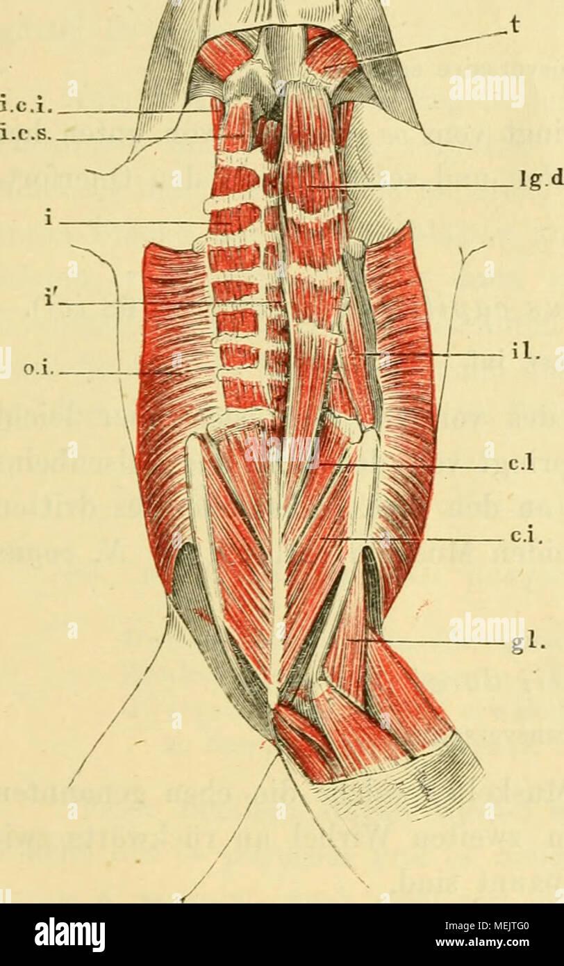 Ziemlich Räder Zahn Anatomie Physiologie Und Okklusion Pdf Galerie ...