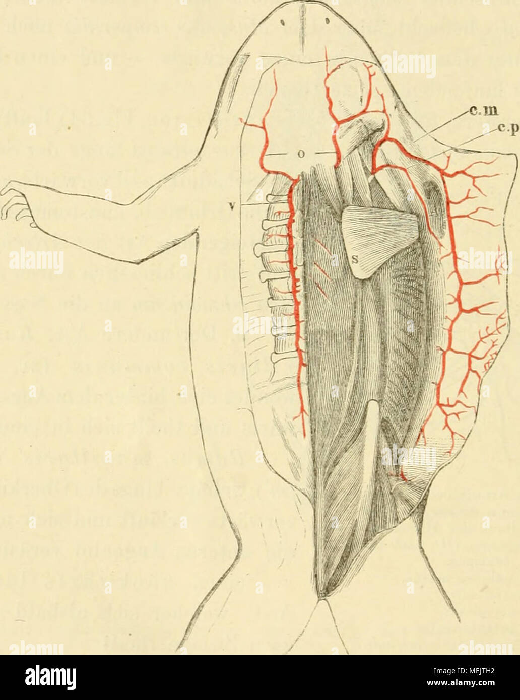 Tolle John Wiley And Sons Anatomie Und Physiologie Ideen ...