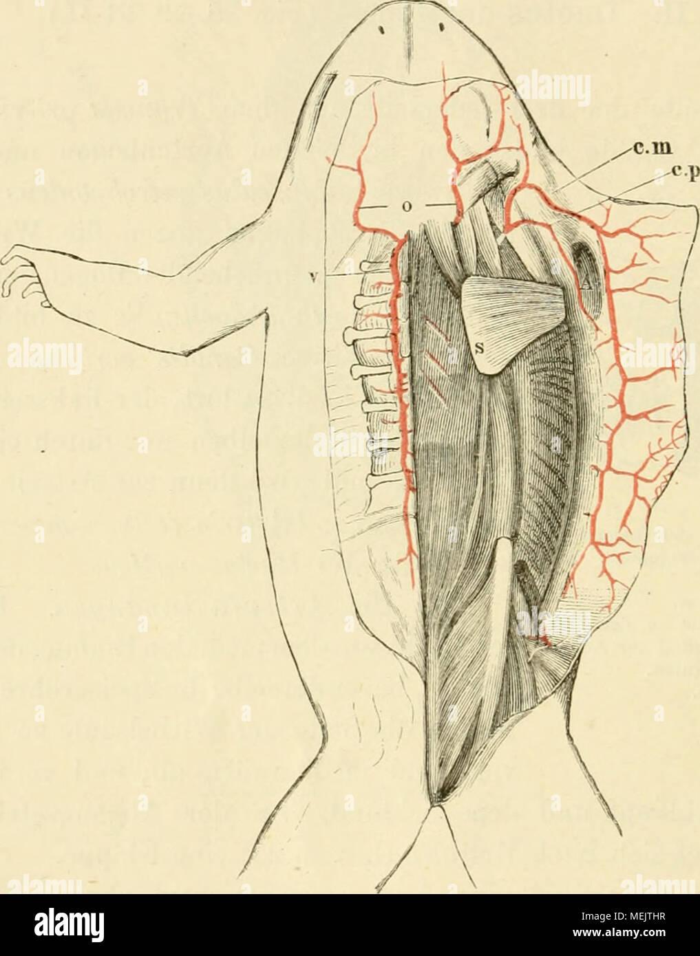 Ungewöhnlich Saladin Anatomie Und Physiologie Testfragen Ideen ...