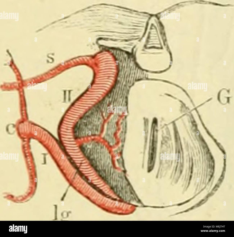 Ausgezeichnet Clep Anatomie Und Physiologie Prüfung Ideen ...