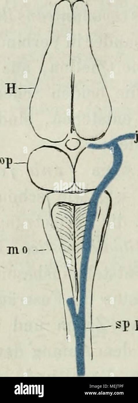 Ziemlich Anatomie Eines Eies Bilder - Menschliche Anatomie Bilder ...