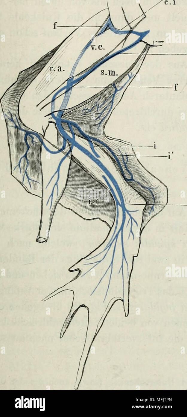 Erfreut Diagramm Des Fußanatomie Bilder - Menschliche Anatomie ...