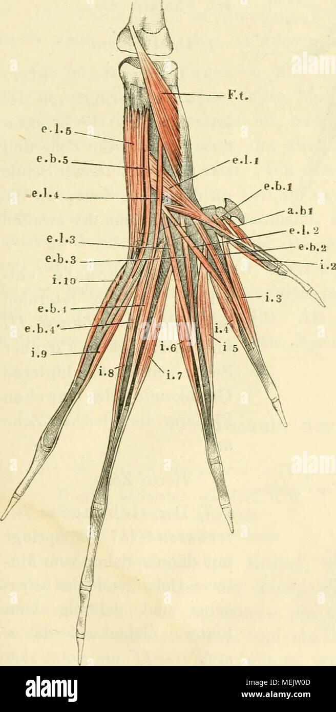Ausgezeichnet Nnh Anatomie Ideen - Physiologie Von Menschlichen ...