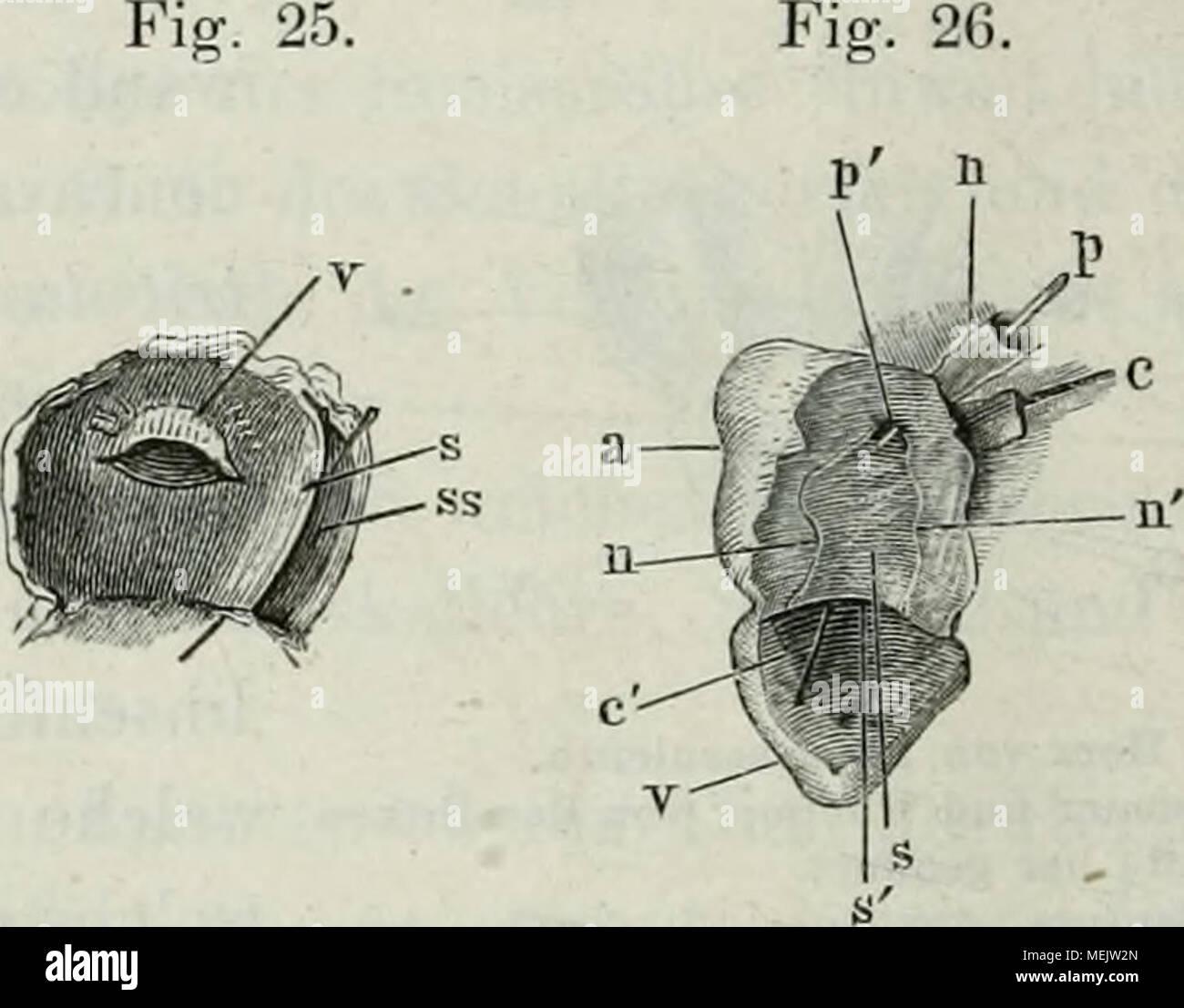 Fantastisch Anatomie Der Inneren Organe Diagramm Galerie ...