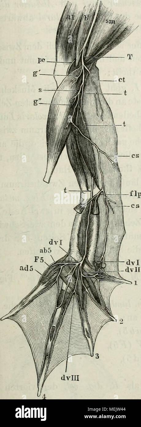 Ungewöhnlich Saladin Anatomie Und Physiologie 6. Auflage Testbank ...