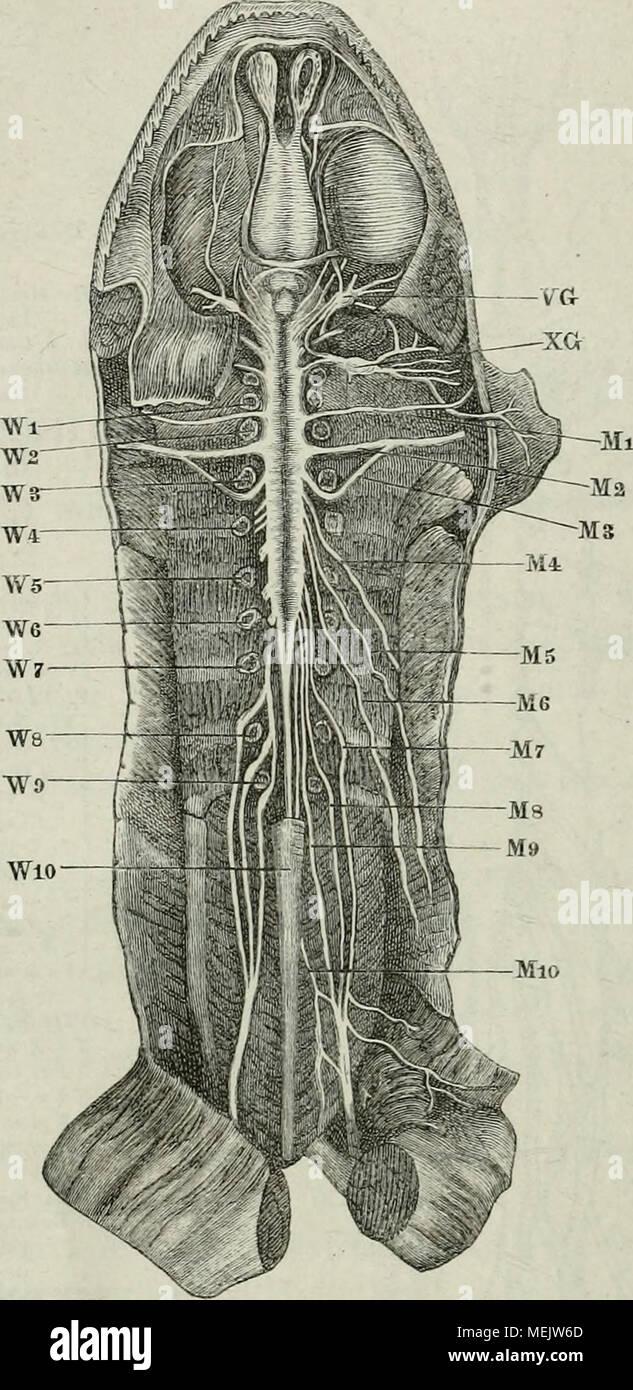 Gehirn und Rückenmark Stockfotos & Gehirn und Rückenmark Bilder - Alamy