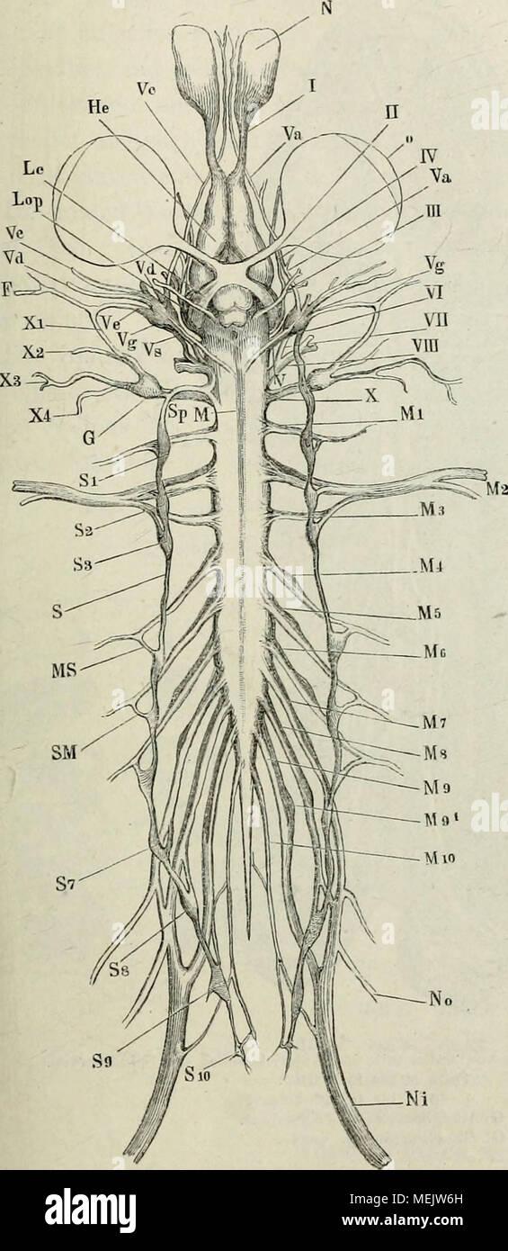 Anatomie Rücken Stockfotos & Anatomie Rücken Bilder - Alamy