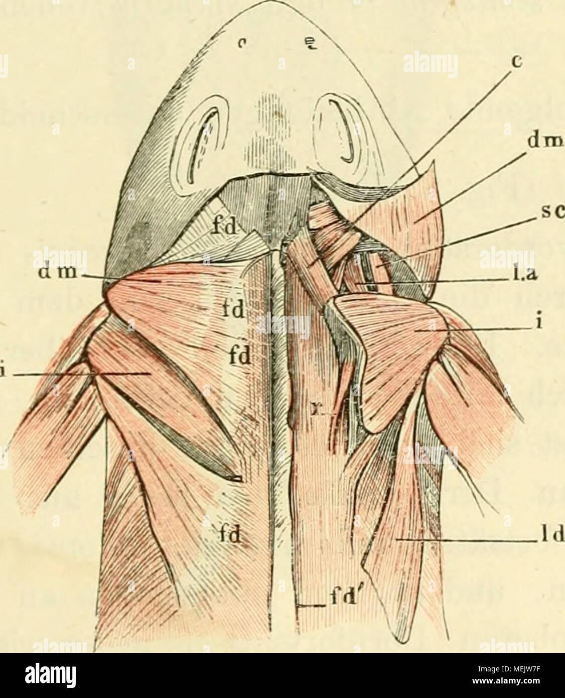 Beste Anatomie Und Physiologie Färbung Arbeitsmappe Kapitel 7 ...