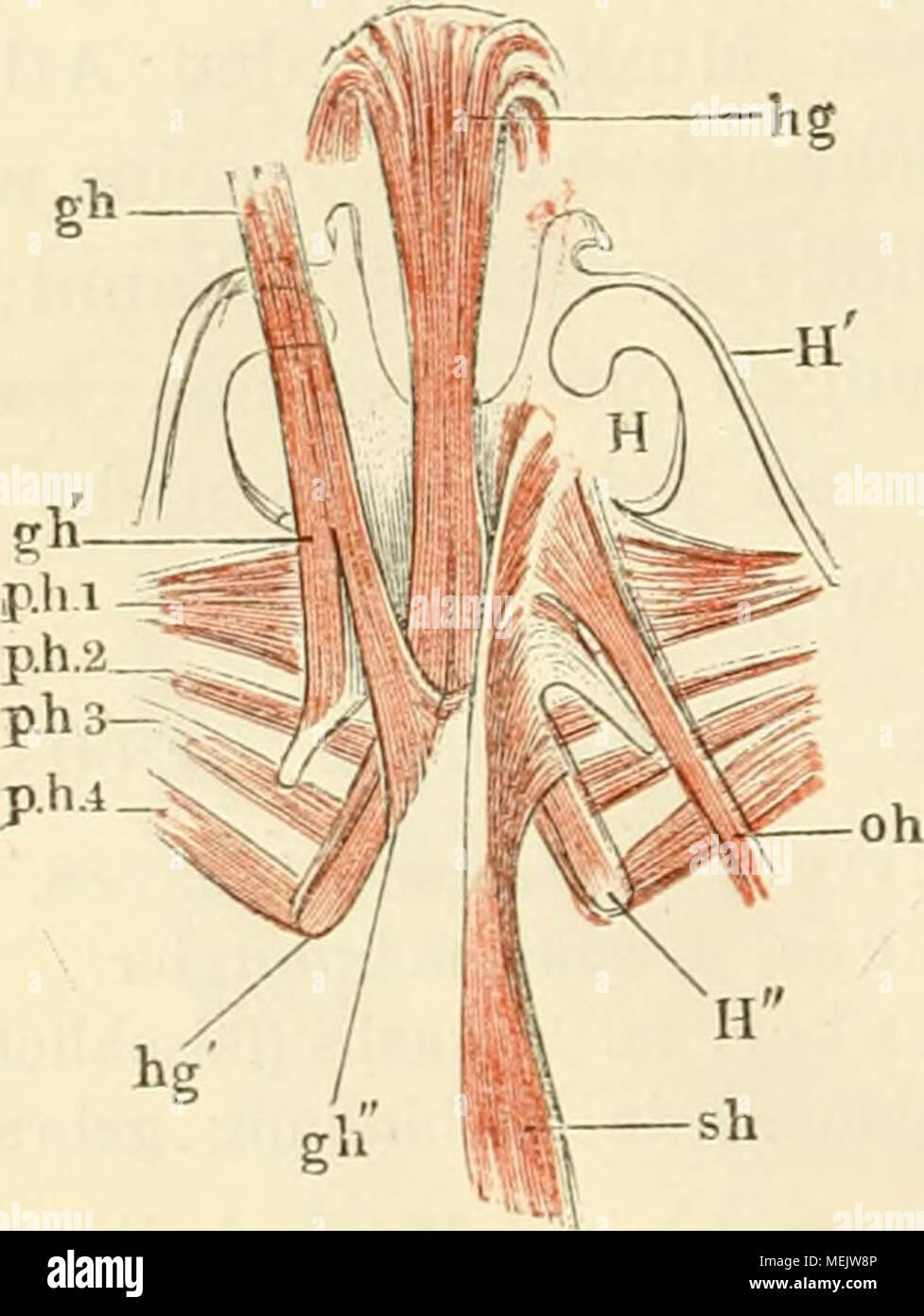 Nett Stossen Anatomie Ideen - Menschliche Anatomie Bilder ...
