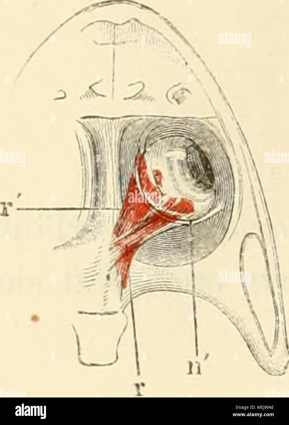 Berühmt Die Menschliche Nase Anatomie Bilder - Menschliche Anatomie ...